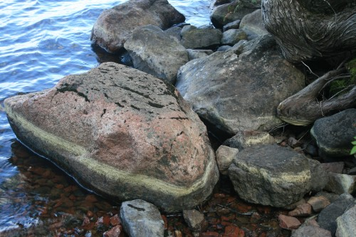 Rocks and Trees on Trout Lake's Shoreline
