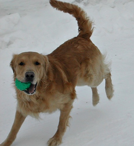 Buddy Playing Ball in the Snow